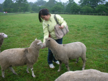 Naoko and sheep