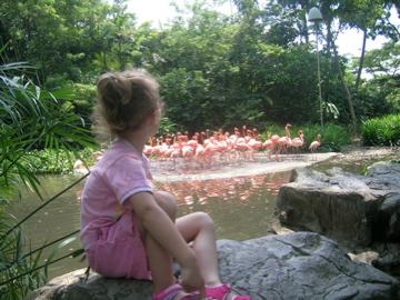Lauren Flamingo 01