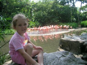 Lauren Flamingos 02