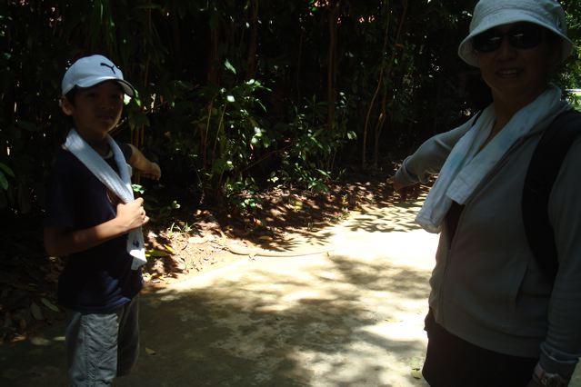 Pointing at Mr Monitor Lizard having a sun-bath on the forest path