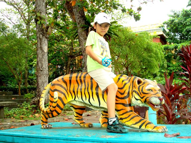 Zen rides the tiger