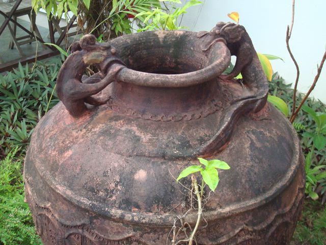 Lizard pots