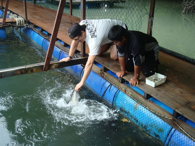 Feeding the stingray