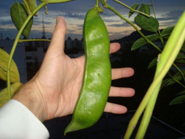 Big bean!!