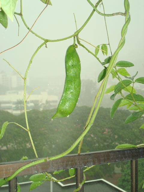 Big bean!