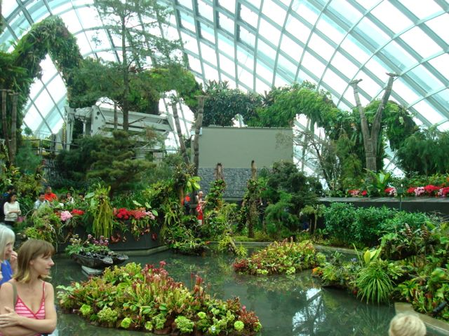 "The ""lost world"" at the top of the conservatory"
