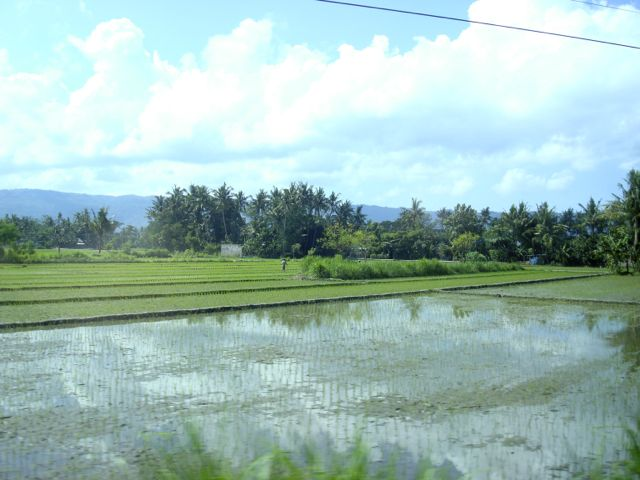 Driving to the seaside, roadside farm paddies...