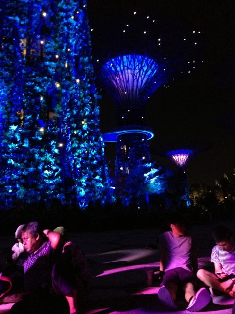 Sky Tree Grove. Gardens By The Bay.