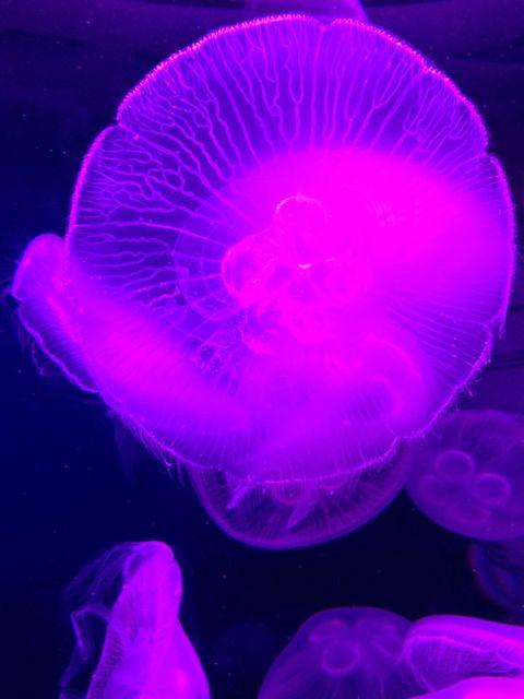 Jellyfish!!