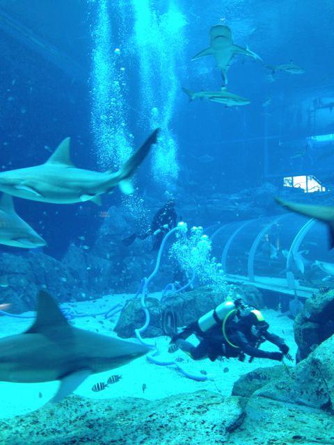Sharks!!