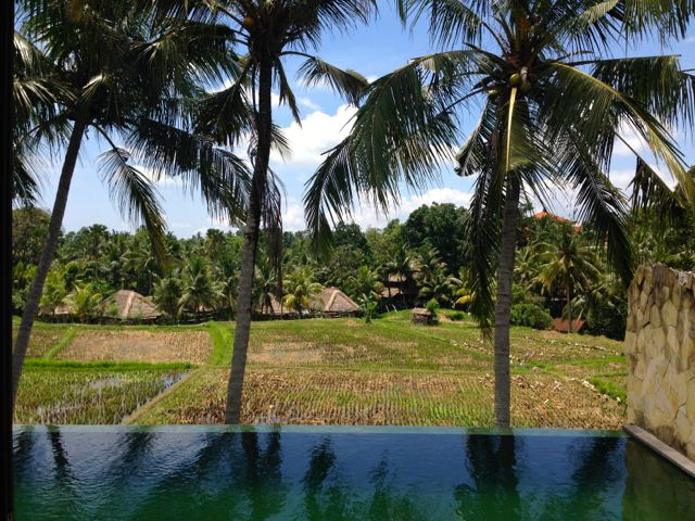 Rice paddy view!