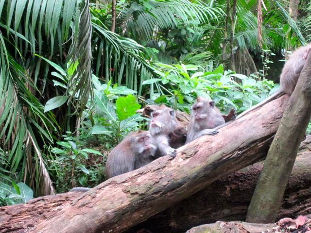 Monkey forest monkeys!!